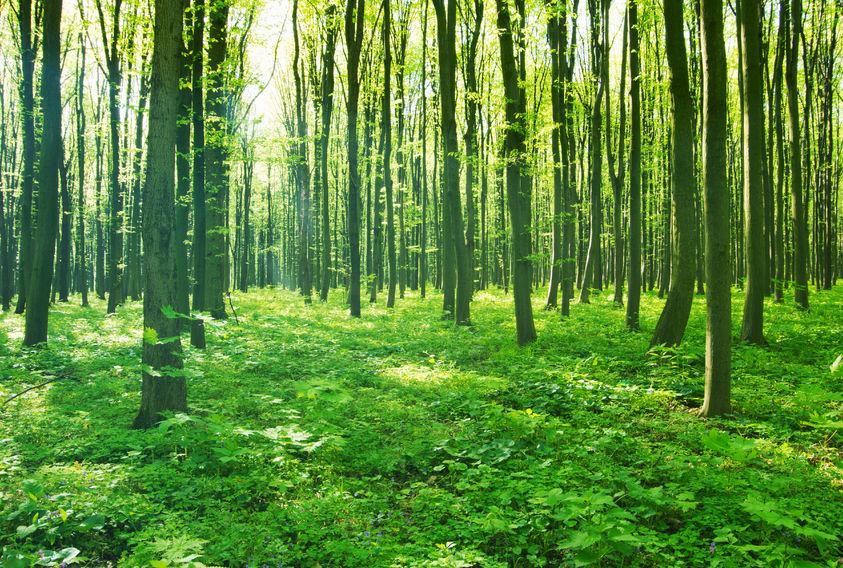 D-02森林-03-001
