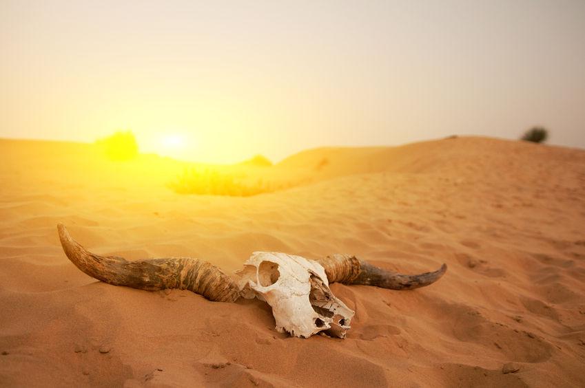 D-06沙漠-01-001